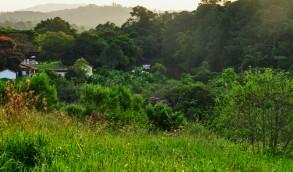 a fazenda